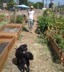 Cyndi Hubach and her community garden in Los Angeles