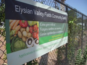 Cyndi Hubach's Garden--Elysian Valley Community Gardens