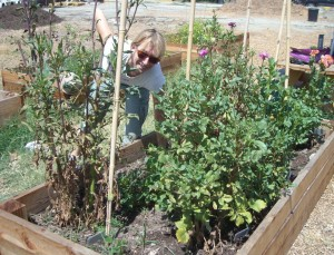 Cyndi Hubach in one of the beds in her community garden