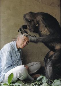 Jane Goodall, explorer