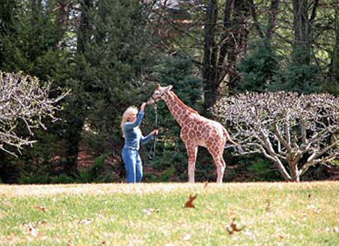 Marcella Leone feeding giraffe at LEO Conservation Center