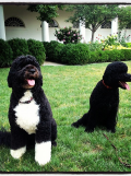 """TWE Photo of the Week: Sunny Arrives to Join """"Brother"""" Bo at the White House"""